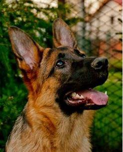 Kastrace psů a koček, veterinární ordinace Ostrava