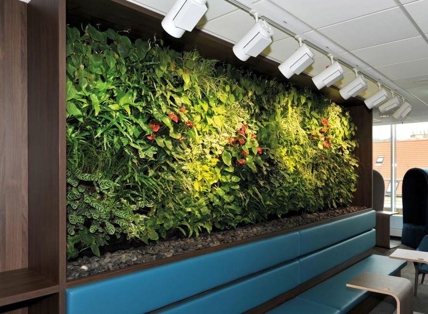 Hydroponie – moderní pěstování rostlin v interiérech