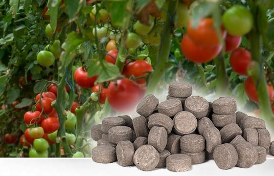 Tablety, které se pomalu rozpouštějí a poskytují hnojení pro rostliny