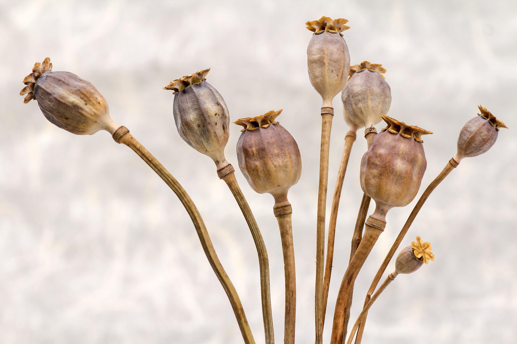 Suroviny pro pekaře a cukráře zejména ořechy, semena a sušené ovoce