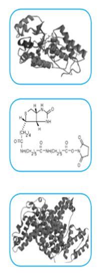 LinKine™ Labeling Kity Abbkine pro fluorescenční konjugáty, Biogen Praha, s.r.o.