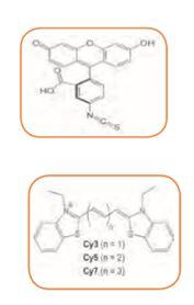 LinKine™ Labeling Kity Abbkine, Biogen Praha, s.r.o.
