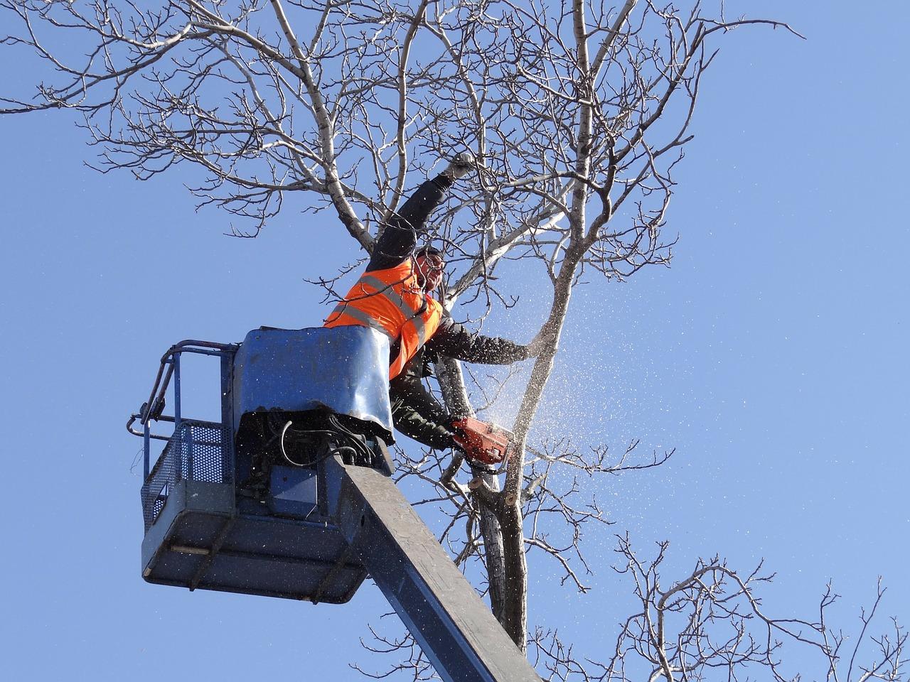 Kácení stromů rizikové a běžné profesionálně zajistí Král – zahradnické práce, Praha 5