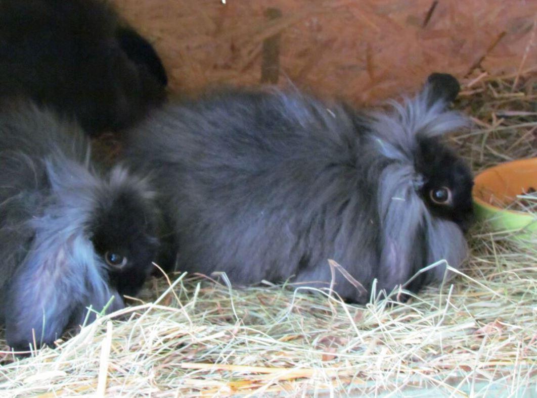 Základy výživy zakrslého králíka