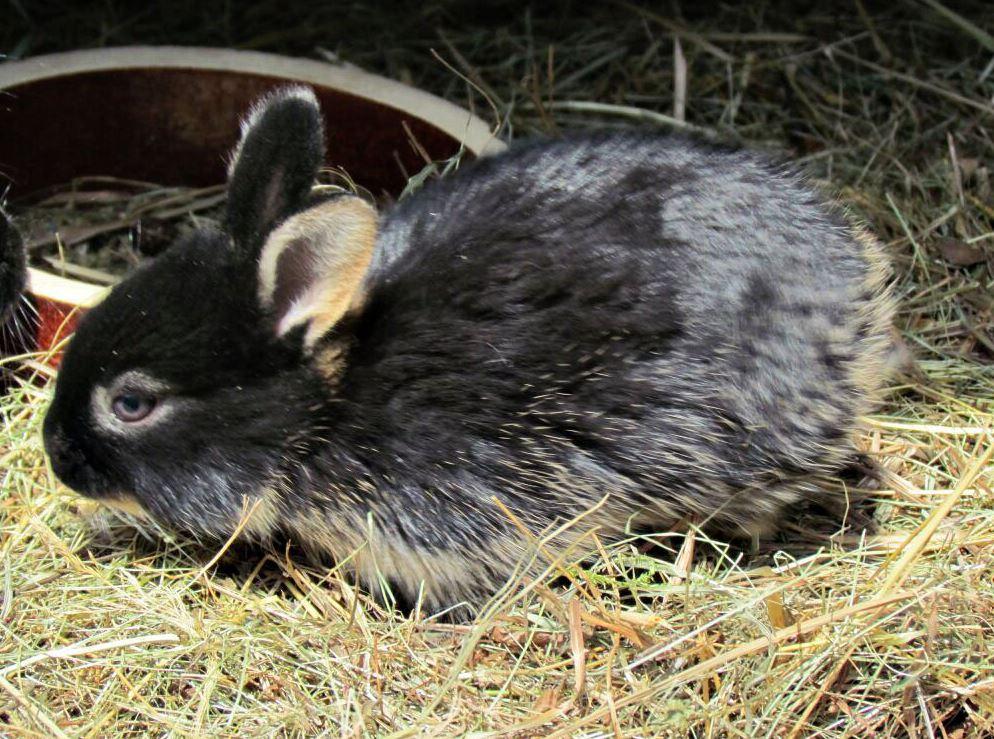 Výživa pro zakrslého králíka Veterina Slovanka