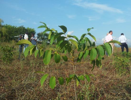 Nejnovější půdní kondicionér se speciálním vyvinutím pro sázení stromů a keřů