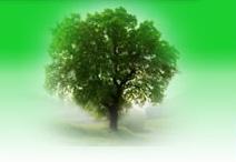 Vyklízecí práce, hubení škůdců i údržba zeleně v Praze a okolí