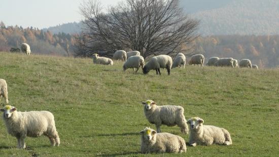 Jehněčí maso v biokvalitě aneb zdraví z valašské ekofarmy