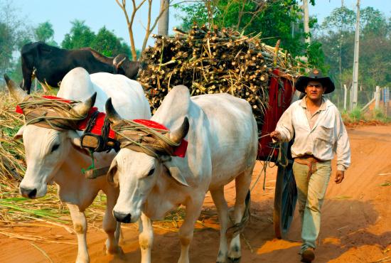 Co vlastně znamená Fairtrade? Třeba férový život s vůní třtiny