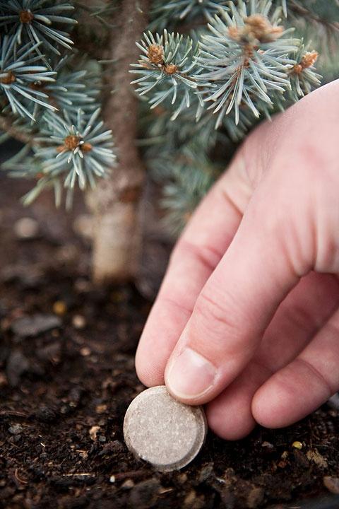 Pomalu rozpustná hnojiva pro lesní výsadbu