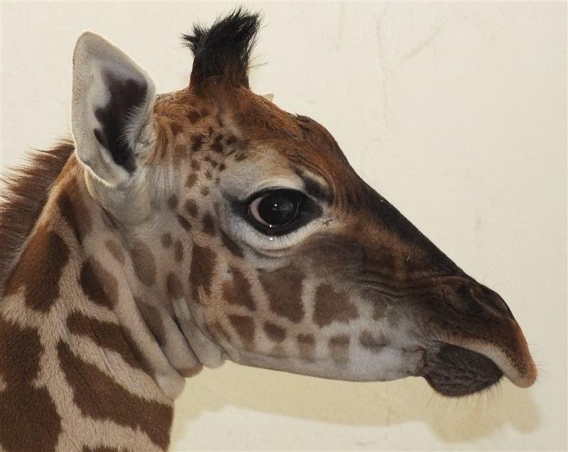 Historie Zoologické zahrady Ústí nad Labem: Od ptačího parku k ZOO
