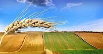 Úvěr na nákup půdy rychle, výhodně a spolehlivě