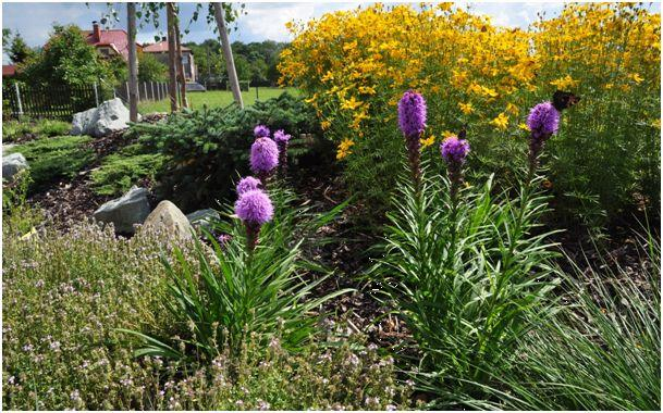 Trvalkov� z�hony jsou ned�lnou sou��st� modern� zahrady