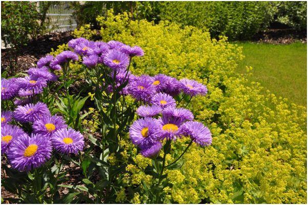 komplexní péče o zahrady