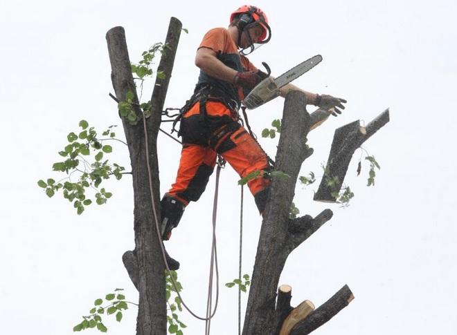 Rizikové kácení stromů a výškové práce snadno a rychle