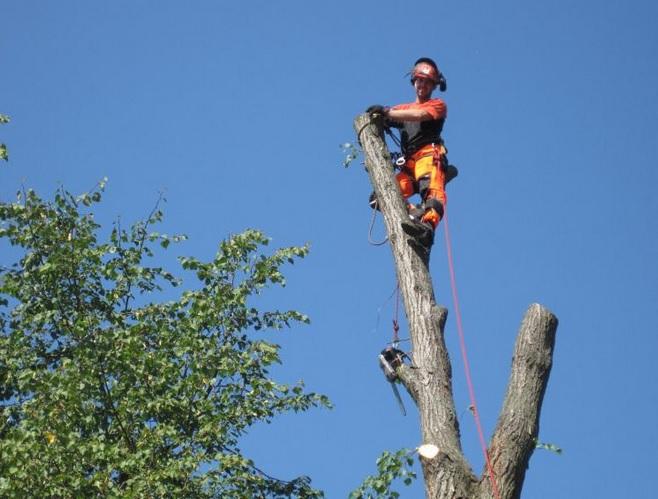 Rizikové kácení stromů i výškové práce za použití profesionální techniky