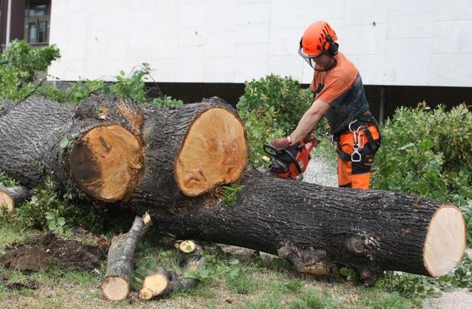 Výškové práce, rizikové kácení stromů i údržba zeleně
