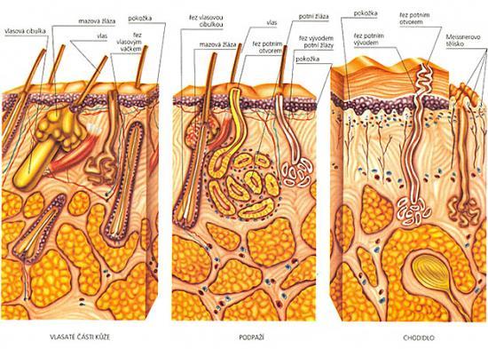 Dermatovenerologie vyl��� i velmi nep��jemn� ko�n� onemocn�n�