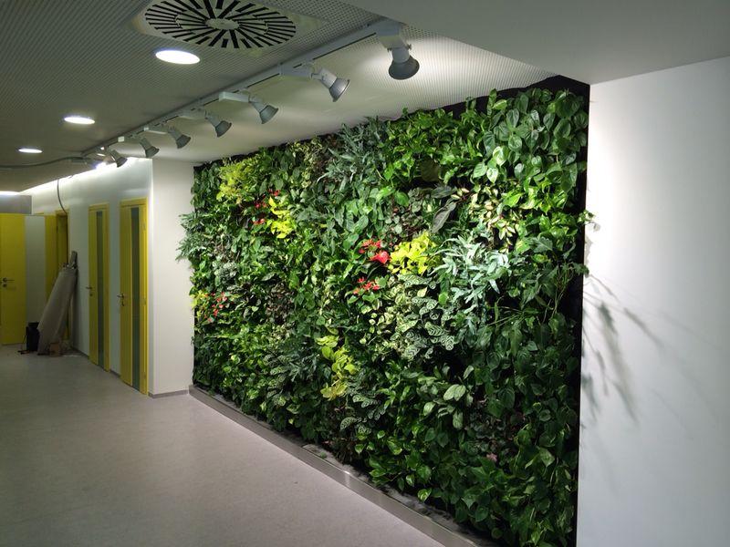 Vertikální zahrady od firmy Matouš Hydroponie dodají interiéru luxusní a originální vzhled.