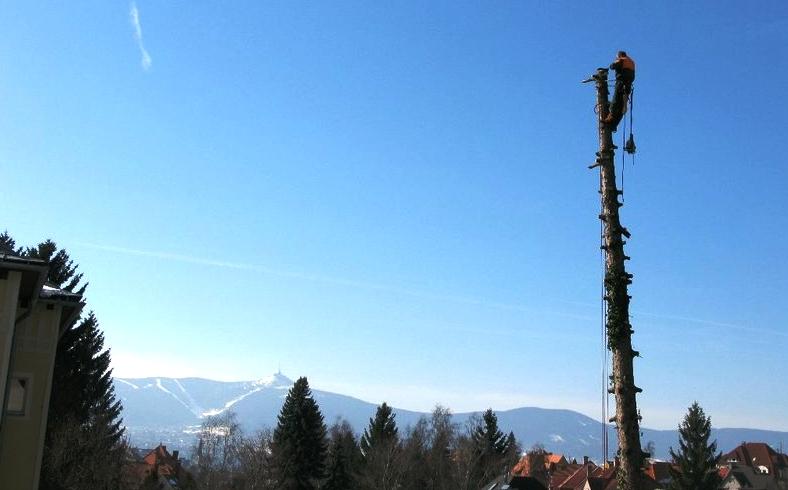 Rizikové kácení stromů – pro likvidaci problematicky rostlých stromů si zavolejte profesionála