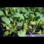 Rostliny k výsadbě, sadba na zahradu, do truhlíků i na balkon