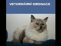 Moderní veterinární ordinace Ostrava