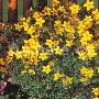 Zahradní, balkonové i pokojové rostliny nabízí eshop i prodejna Zahradnictví Petro Mělník
