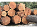 Pila Belcredi: kvalitní dřevo a řezivo pro široké využití