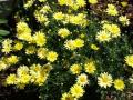 Zahradní centrum Malinkovič dopřeje vaší zahradě novou tvář
