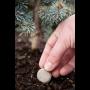 Ekologicky i ekonomicky výhodná pomalu rozpustná hnojiva