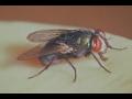 Jak předejít přemnožení much ve zvířecím chovu?
