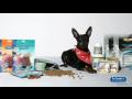 Kvalitní krmivo pro psy či kočky se vyplatí jim i vám