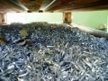 Kovošrot si se zbytečným odpadem ekologicky poradí