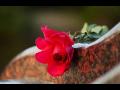 Pohřební ústav Pegas zajišťuje důstojné a diskrétní poslední rozloučení