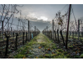 Vinařství Čech s.r.o. -  to jsou kvalitní vína přívlastková, vína ledová a barikovaná z Tvrdonic