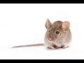 Deratizace, dezinfekce a dezinsekce od firmy Stanislav Kov�� je v�dy na jedni�ku