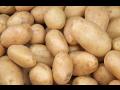 Již v červnu můžete mít vysoce kvalitní rané brambory vynikající chuti ze Znojemska