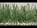 hybridní trávník přirozeného vzhledu