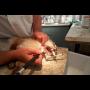Zbavte svého mazlíčka bolesti zubů - Veterinární ordinace Slovanka zajistí odstranění zubního kamene u zvířat