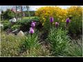 Trvalkové záhony jsou nedílnou součástí moderní zahrady