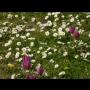 Zelené potraviny z panenské přírody nabízí Klub Energy