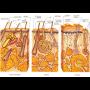 Dermatovenerologie vyléčí i velmi nepříjemná kožní onemocnění