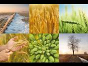 Distribuce osiv polních plodin, hnojiv a chemických přípravků na ochranu rostlin