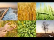Kvalitní osiva polních plodin dodává už 25 let firma VP AGRO
