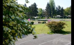 Růžová zahrada je důležitou součástí botanické zahrady Olomouc