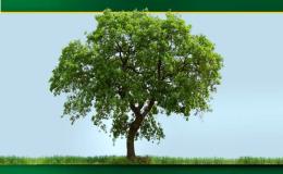 Specializujeme se na péči o zeleň
