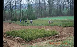 Sazenice lesních i okrasných dřevin, PROPLANT GROUP s.r.o.