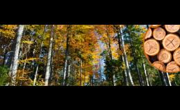 Foresta SG, a.s.: dotace na poradenské služby pro vlastníky lesa