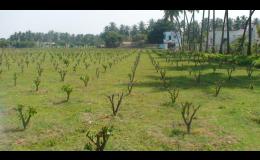 Kondicionéry pro květinové záhony a plodiny