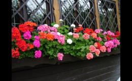 Květiny na balkon - Zahradní centrum Malinkovič-Důbrava Břeclav